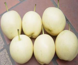 秋天宜食梨