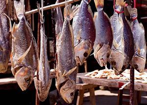 中医言吃鱼也要看体质