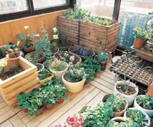 老人巧用植物来净化居室