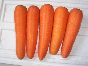 宝贝!胡萝卜吃多也会不孕