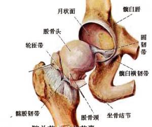 壮汉刘欢的股骨头坏死是怎么来的