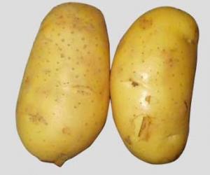 土豆的绝佳好处