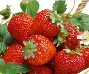 老年人应多吃草莓