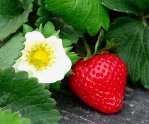 """洗草莓时别摘小绿叶 污染通过""""创口""""渗入"""